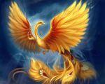 phoenix12 DE ORO