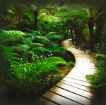fairy-s-forest-path-105377