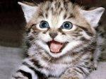 GATITO BONITO-NICEST KITTY CAT