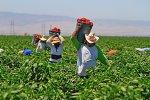FIELD WORKERS - PIZCADORES la-me-legislature-20120821-001