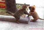 perro-gato-peleando