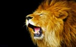 roaring-lion-wallpaper-_402865193