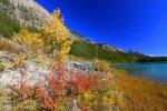 11869143-los-colores-brillantes-de-caida-a-lo-largo-de-la-costa-de-los-lagos-de-aves-acuaticas-en-el-parque-n