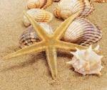 conchas y estrella de mar