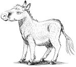 Donkey (1)
