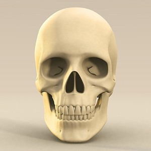 skull.max_thumbnail1.jpg2e64975d-2905-4781-a884-a11221bc6868Larger