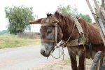 4916425-a-cute-donkey-near-a-wooden-cart--shot-in-dobrogea-romania