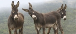 burros (1)