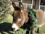 donkey boy christmas 1