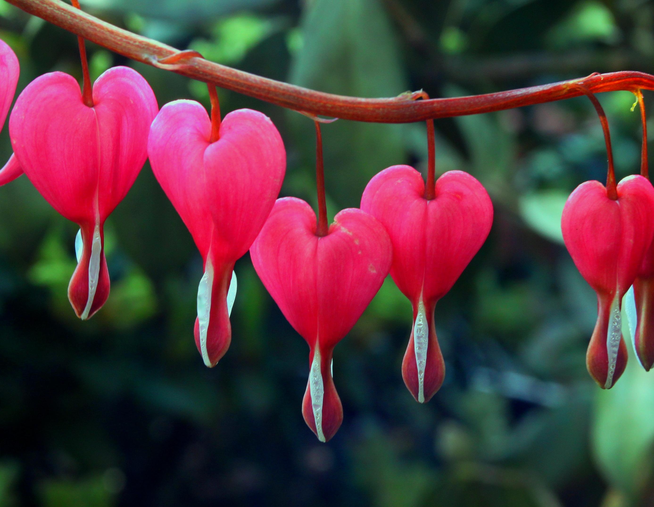 Las flores m s bellas del planeta for Las plantas mas bonitas
