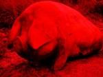 'Fat Pig' by Nigel Sardeson