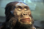 Australopithecus_afarensis_adult_male_-_head_model_-_Smithsonian_Museum_of_Natural_History_-_2012-05-17