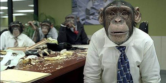 monkey_office